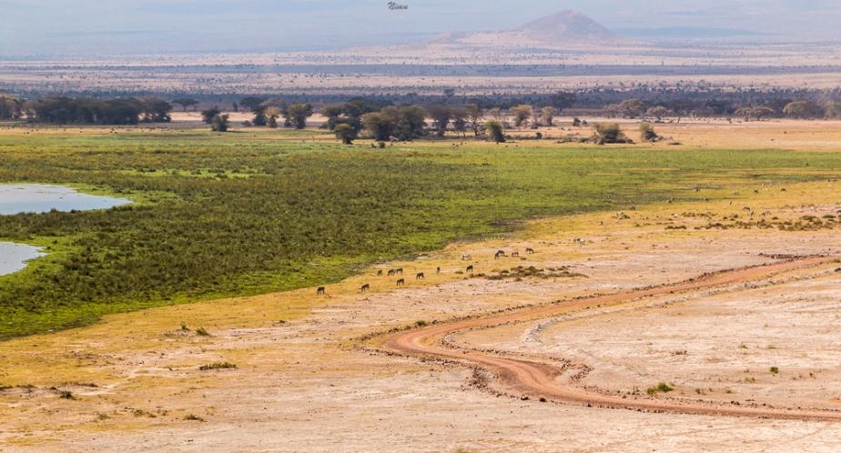 Amboseli part II-32