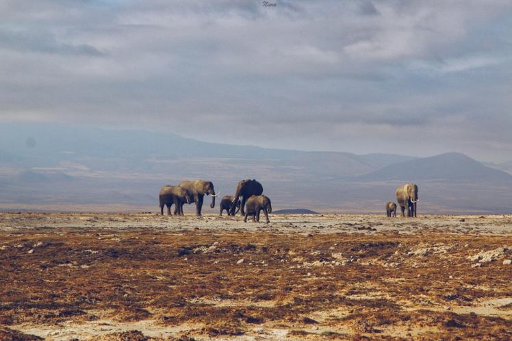 Amboseli Part III-10